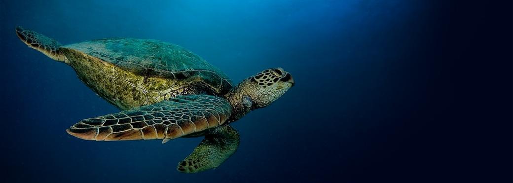 carousel-turtle-1400x500